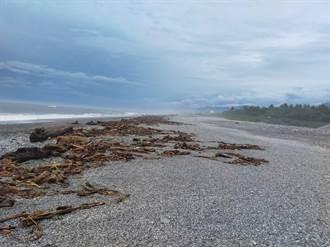 台東知本、富岡漁港漂流木滯留 林管處籲民眾未經公告勿撿拾