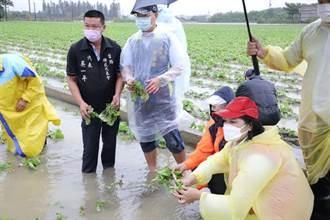 雲林農損擴大至5211萬元 全品項作物現金救助9日公告