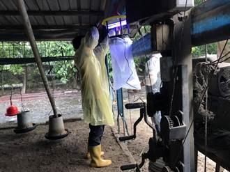 台南市出現4例日本腦炎 市府自購疫苗供白河民眾施打