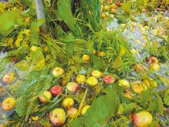 全台農損逾1.7億 菜價飆新高