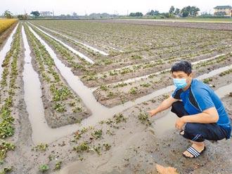 5月旱8月澇 農民嘆不讓人活