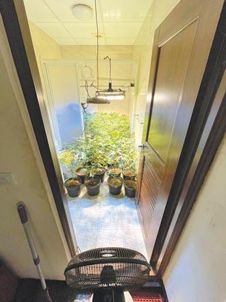 失業男租屋種大麻 市值8000萬
