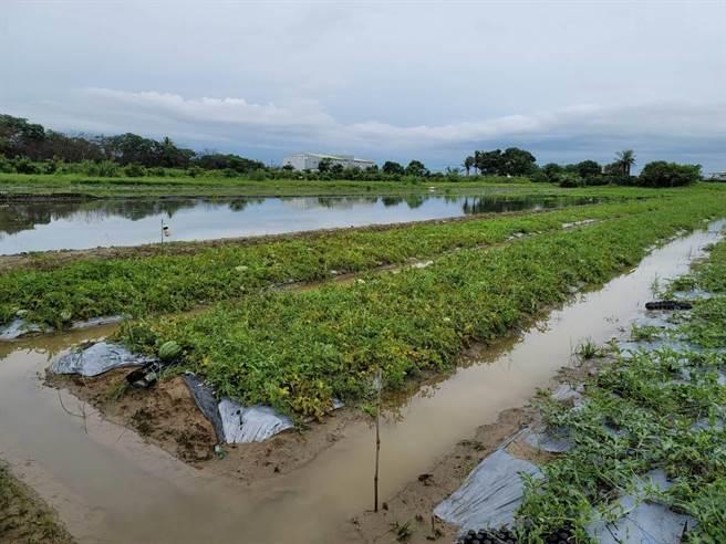 西瓜豪雨浸水受損情形。(南市府農業局提供/張毓翎台南傳真)