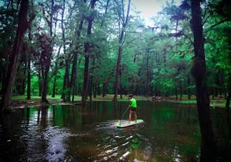 漁光島防風林泡水 攝影師發現台南版水漾森林