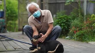 認養取代購買 金牌農村推認養流浪犬貓守護農場