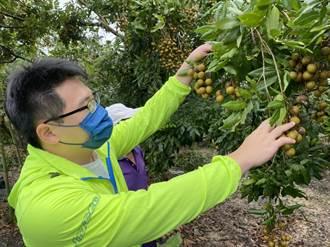 台南農損面積已達998.98公頃 龍眼最慘占一半