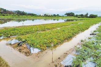 蔬果產地重創 北農啟動平價措施