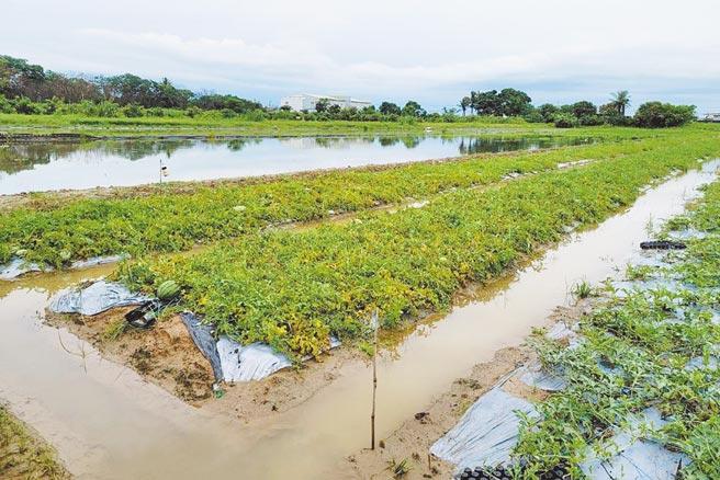 台南近日的豪大雨造成多處農田淹水,不少西瓜浸在水中,依中央氣象局資料,短期內還有降雨機會,預料農損將再增加。(台南市農業局提供)