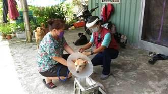 提高狂犬病疫苗注射率 新北動保處提供偏遠地區到府施打