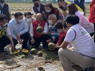 豪雨害台南歸仁西瓜「全軍覆沒」 蘇貞昌:政府會扶農民一把