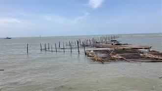 西南氣流帶走一年心血 嘉義蚵農初估損失8000萬元