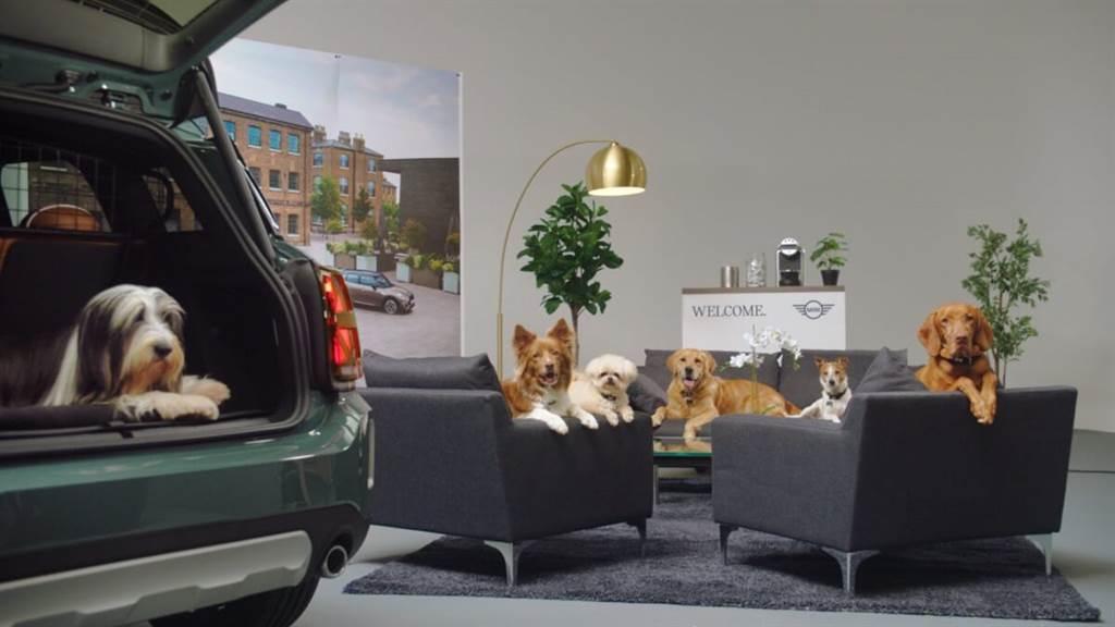 第一個狗狗友善品牌 MINI與英國慈善機構合作(圖/CarStuff)