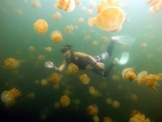 帛琉旅遊泡泡疫苗免費打 帛琉觀光局加送50美金旅遊金