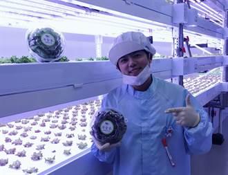 三峽青農無塵室種蔬菜 打造農業科技工廠