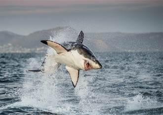 釣到魚欲拉上岸驚見巨大陰影 戰利品秒被劫走眾人看傻