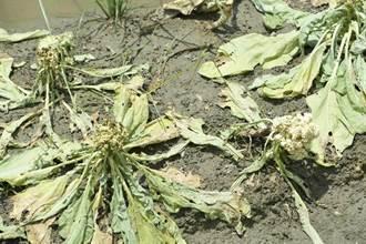 農委會:農損逾2成就可請領現金救助