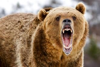 女誤闖森林迷路 搜救驚見滿地腳印 恐遭熊群捕食