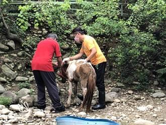 春天農場馬匹死亡 動保團體批行政不作為造成疏失
