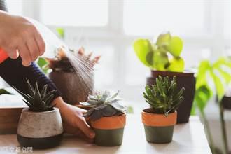 多肉植物怎麼消風了?快檢視三大重點即刻救援!