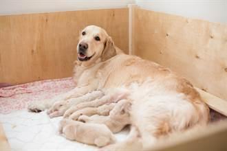喪子母狗遇孤兒幼犬 奇蹟出現 志工淚崩