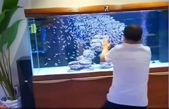 男打太極隔空指揮魚群游動 「乾坤大挪魚」全場佩服