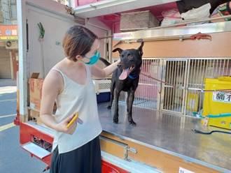 網路推廣 中和動物之家2個月替51隻狗找到家