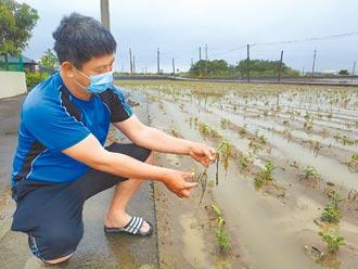 農損逾4億元 水利署稱淹水不嚴重
