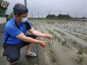 農損放寬傳有農民拿空地申請 農委會:如虛報不予救助