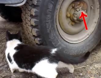 真實版傑利鼠隱身輪胎「躲貓貓」 結局網全哭了
