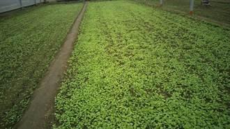 北市蔬菜量價齊揚、均價再破50元  農糧署釋冷藏蔬菜