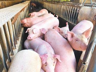 肉品市場休市 業者:影響豬價有限