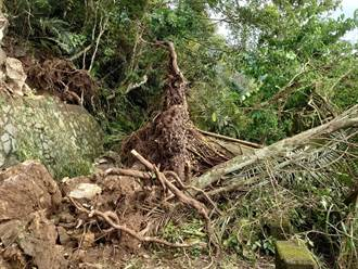 花蓮佐倉步道遭大片樹木土石覆蓋 經搶修預計18日重新開放