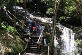 遊客一日遊居多 阿里山旅宿業者盼中央再推安心旅遊補助