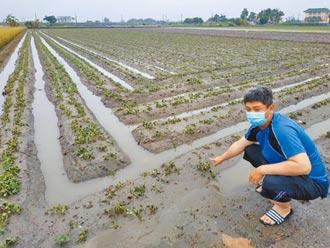 農民卡實名制 確保救到實耕者