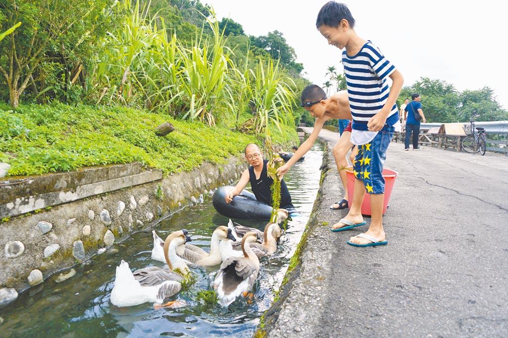 大茅埔圳兼具灌溉及護城功能,近年社區導覽將水圳變身漂漂河而爆紅。(王文吉攝)