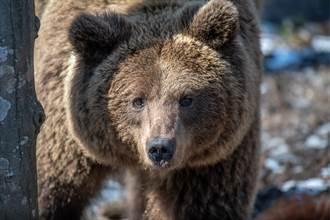 熊被救後視恩人為父母 狂討抱發呼嚕聲 反差萌撒嬌融化網