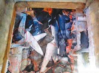 台灣被列兩非法漁業黑名單 被指涉嫌捕撈保育類鯊魚及混獲海龜 漁業署將速與美諮商