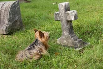 22歲男慘遭謀殺棄屍街頭 忠犬悲傷躺墳上眾人心碎