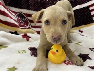 落實源頭管理 彰化縣遊蕩犬隻減少7305隻全國最多