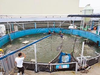 台灣鯛科技漁民 3人管理22池