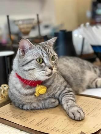 154隻走私貓被安樂死 白喬茵盼尊重生命