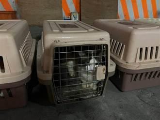 親手終結154隻走私貓挨轟 獸醫師發聲「1事盼反思」