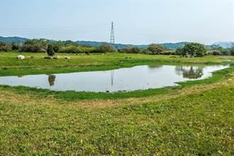 新竹縣竹東河濱公園生態池明年2月恢復生機