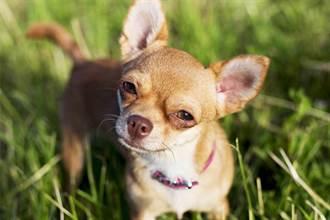 毛孩讀心術》主人罹癌 愛犬突過世 寵物溝通才知擋災真相