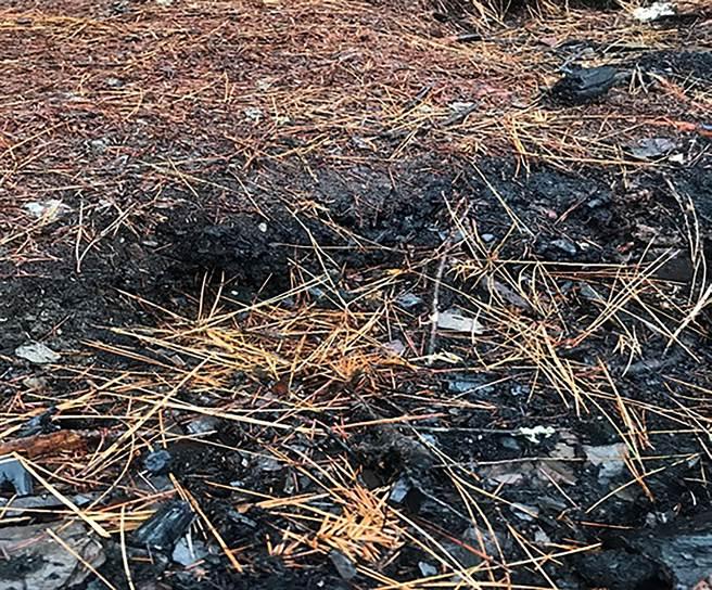 NCC前專委喬建中等5人引發12天森林大火,南投地檢署徒步來回走60公里,到現場勘查,攝得災後營火堆旁燃燒焦黑之後地底腐質成層。(南投地檢署提供/黃國峰南投傳真)
