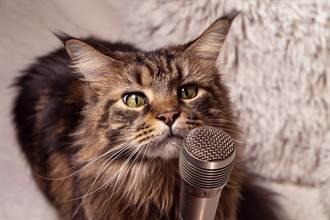 歌王級喵星人 聽到旋律跟哼 超神音準網驚呆