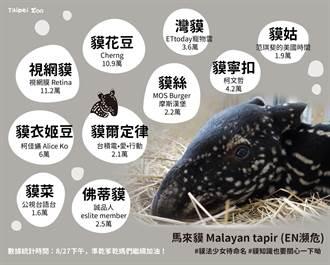 馬來貘寶寶命名戰況激烈「貘花豆」暫居第2 第1名是他