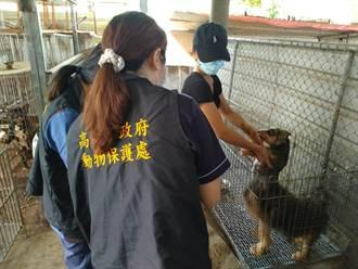 走私貓下單人養殖場內犬隻 經動保處稽查並無不法