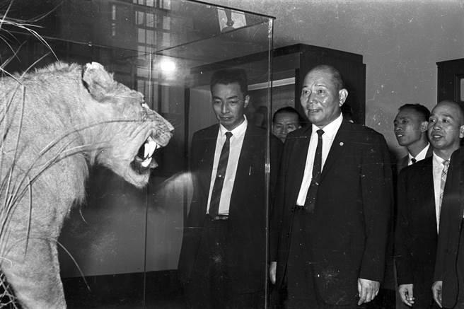 1962年,省立博物館裝修完工恢復開放,省主席周至柔(左2)親臨剪綵後參觀館內展覽。(徵信新聞攝影組攝)