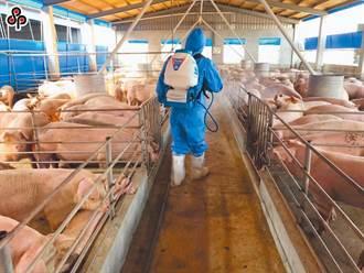 X光機檢疫漏洞只是開始 產業界憂若全面失守 養豬業恐蕭條